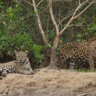 pantanal_JMR_0021
