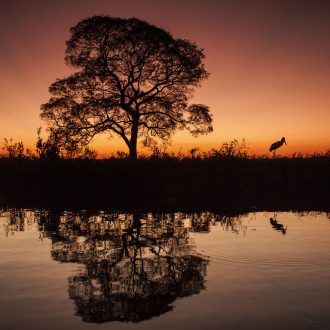 pantanal_JMR_0074