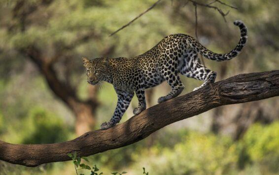 Quênia: essência da natureza
