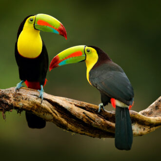 Toucan,Sitting,On,The,Branch,In,The,Forest,,Green,Vegetation,